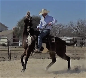 Confidence is knowing that you are physically and mentally prepared. Larry French/ 3LHorsemanship