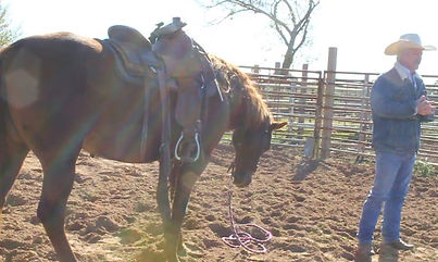 These fundamentals will fix any horse problem you have.3L Horsemanship-Larry French/Arkansas