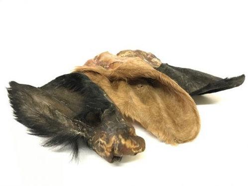 Cows Ears