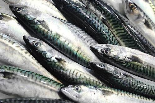 Mackerel 1kg