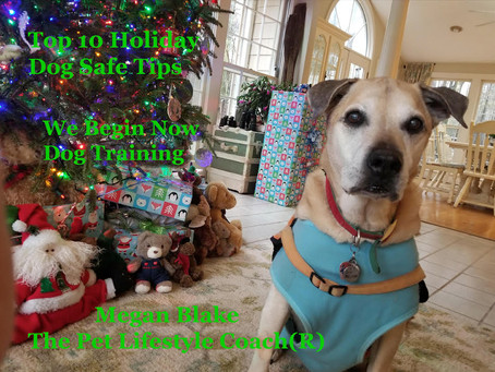 Great Holiday Tips For Your Dogs From Megan Blake!