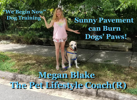 Protect Your Pet's Paws With Megan Blake!