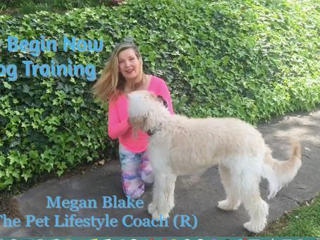 """Heel"": Teaching your dog to walk next to you"