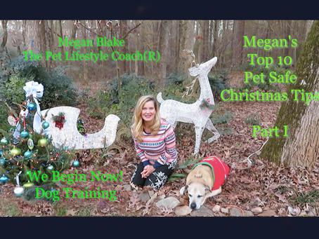 Christmas Safety Tips For Dogs From Megan Blake!
