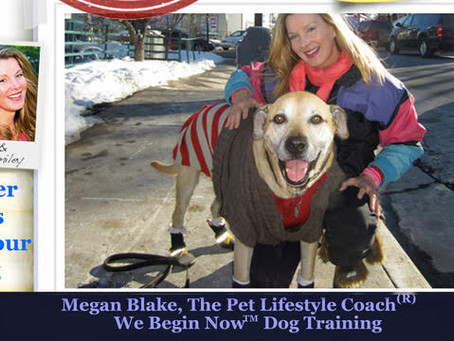 Megan Blake's Winter Weather Tips For Dogs!