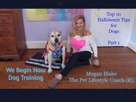 Megan Blake's Top 10 Halloween Tips to Keep Your Dog Safe (part 1)
