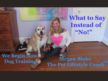 """Repeating The Word """"No!"""" Could Train Your Dog To Ignore You"""