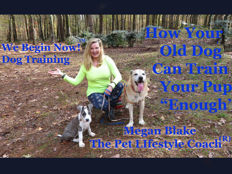 "How Your Older Dog Can Help Train Your New Puppy ""Enough""!"