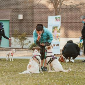 Group Dog Training with Megan Blake, the Pet Lifestyle Coach