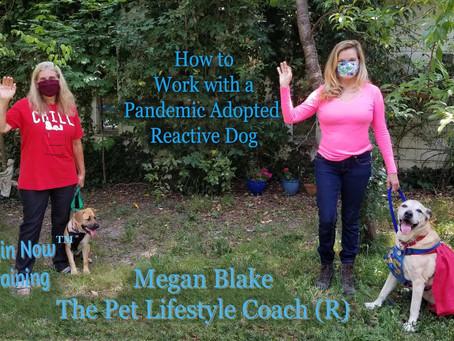 Megan Blake's Pet Training Tips for During Quarantine