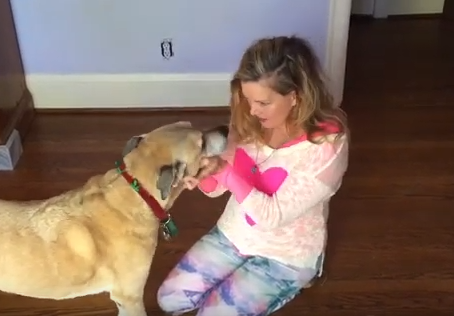 """""""Look at Me"""": A Simple Command to Get Your Dog's Attention"""