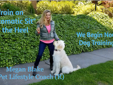 Teach Your Dog An 'Automatic Sit' In The Heel