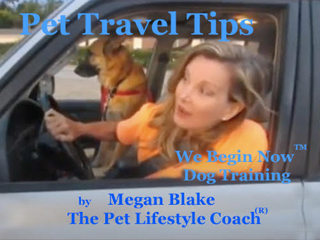 Life Saving Pet Travel Tips With Megan Blake!