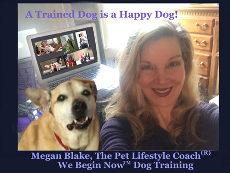 A Trained Dog Is A Happy Dog!