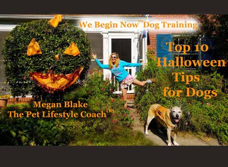 Megan Blake's 10 Halloween Tips For Dogs (part 2)