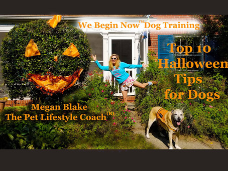 """Beware Of Hidden Dangers For Your Pet This """"Howl-O-Ween"""" - Advice From Megan Blake"""