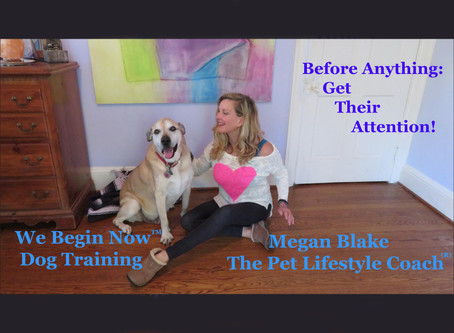 """What's The First Thing To Do Before Saying """"Sit""""? -Advice From Megan Blake"""