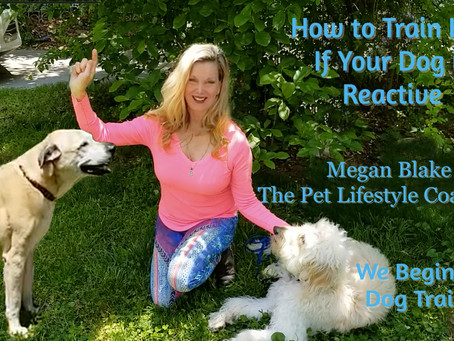 How To Train Heel To A Reactive Dog!
