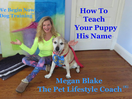 How To Teach Your New Puppy His Name!