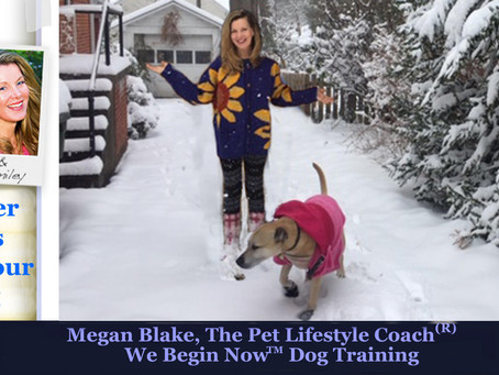 More Winter Weather Tips For Dogs From Megan Blake!