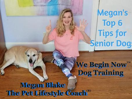Senior Dog Care Tips From Megan Blake!