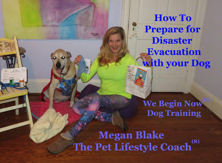 How To Prepare For An Evacuation With Your Dog