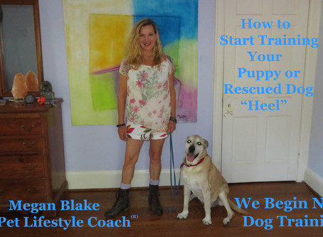 How To Train Your Rescued Puppy To Heel!