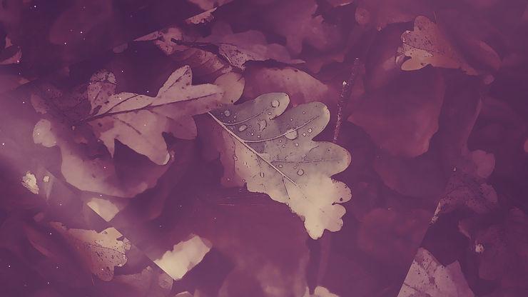 CenterlineNewMedia-Peaceful_Autumn_04_Still_1920x1080.jpg