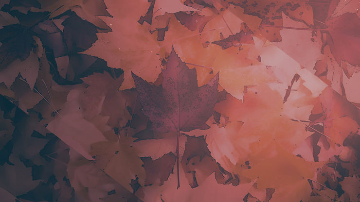 CenterlineNewMedia-Peaceful_Autumn_01_Still_1920x1080.jpg