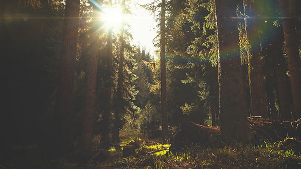 Easter Sunday Forest Church Worship Back