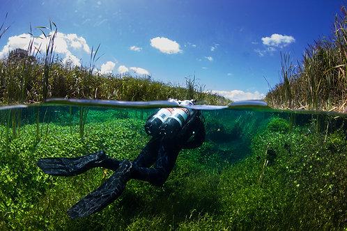 Freshwater Safari - Mt Gambier
