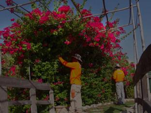 Basatin Landscaping  Success Story