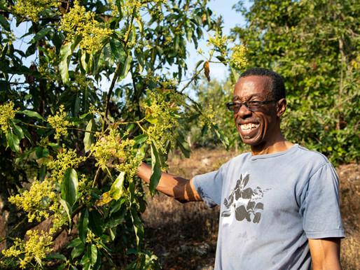 Avocado & Castor Bean Farms Flourishing in Browns Town, Jamaica