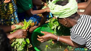 Community-led 40-acre Farm is Yielding Crops for Families in Need in Baiwalla, Sierra Leone