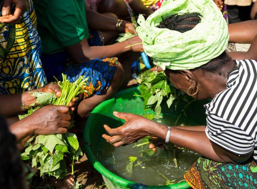 Community-led 40-acre Farm is Yeilding Crops for Families in Need in Baiwalla, Sierra Leone