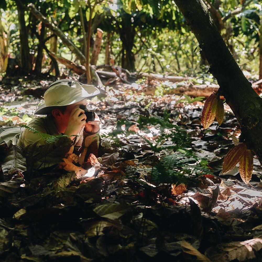 Investigación sobre Chocolate Colombiano