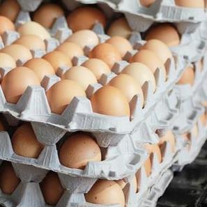 backyard farming eggs