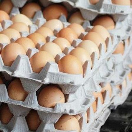 1 Dozen - Backyard Farming Eggs