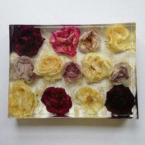 Shade of roses