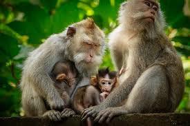Monkey.jfif