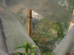 cilerbelen-1gr-9fjpg