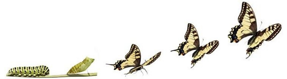 cropped-cropped-Butterfly-evolution.png