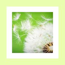 blm website recensiefoto.jpg