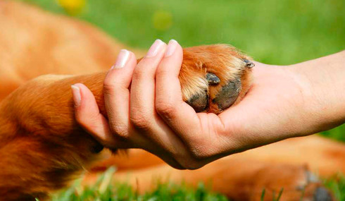 5 enfermedades que te puede transmitir tu mascota