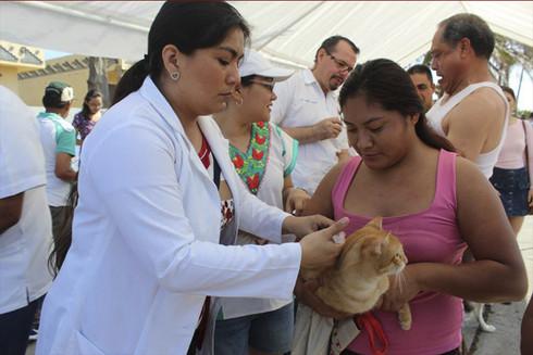 Aplicarán 30 mil dosis en Semana Nacional de Vacunación Antirrábica Canina y Felina 2019