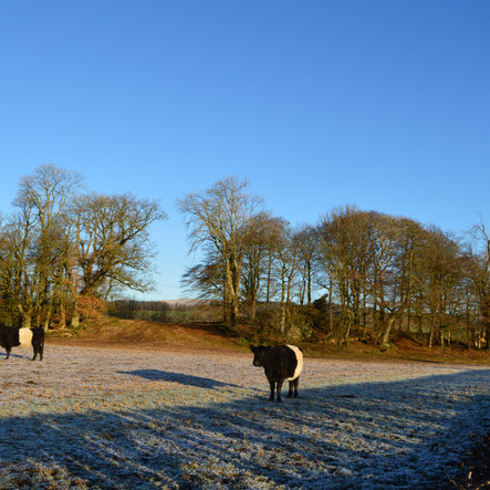 Loving these sunny frosty days