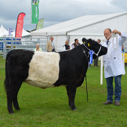 Great day at Dumfries Show