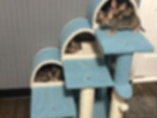 Kittens33.jpg