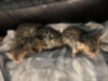 Kittens28.jpg