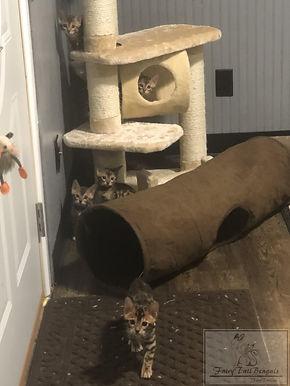 Kittens43.jpg